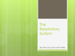 biology 20 respiratory system review guide answers