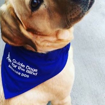 guide dogs for the blind cork