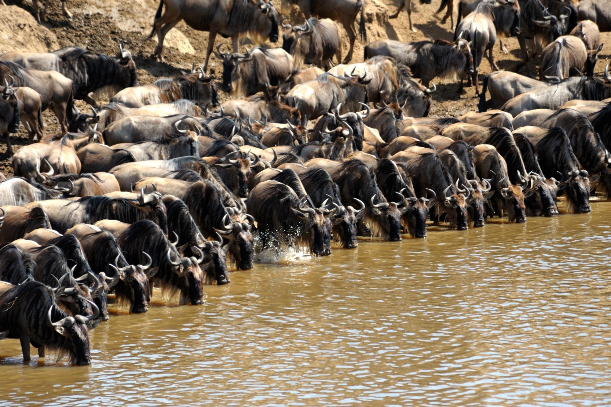 self drive guide masai mara
