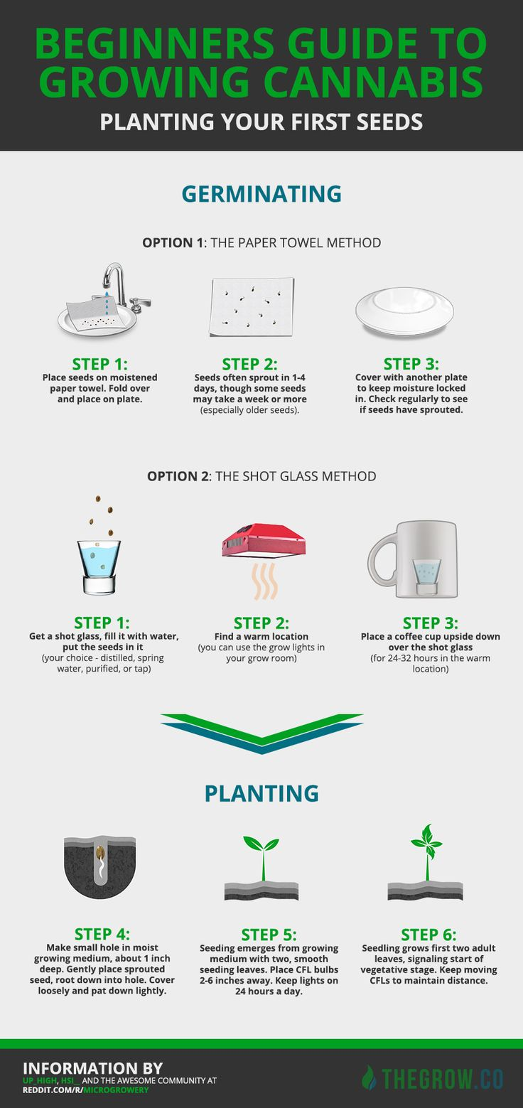 a guide to growing cannabis
