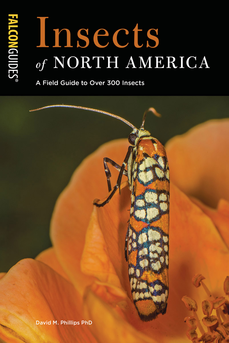 field guide to spiders of north america