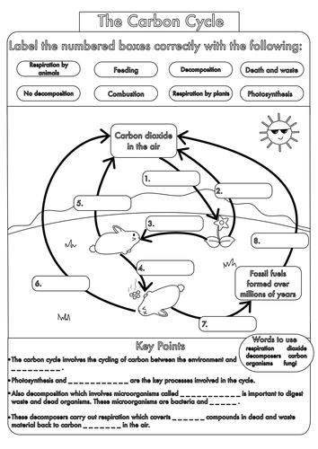 gcse biology revision guide pdf